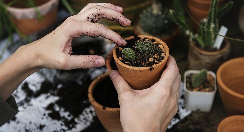 Ogród Wiosną Jakie Rozsady I Sadzonki Wyhodować